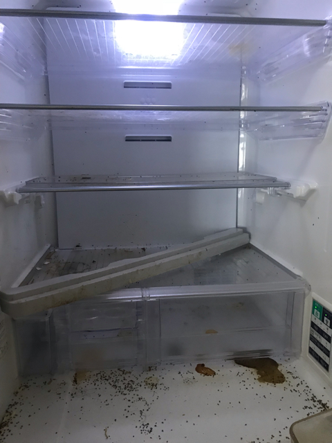 冷蔵庫中身処理後
